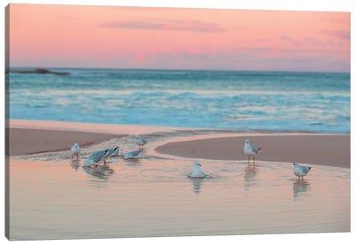 Seagull Swims Canvas Art Print