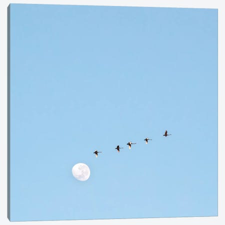 Fly To The Moon Canvas Print #CCD7} by Charlotte Curd Canvas Print