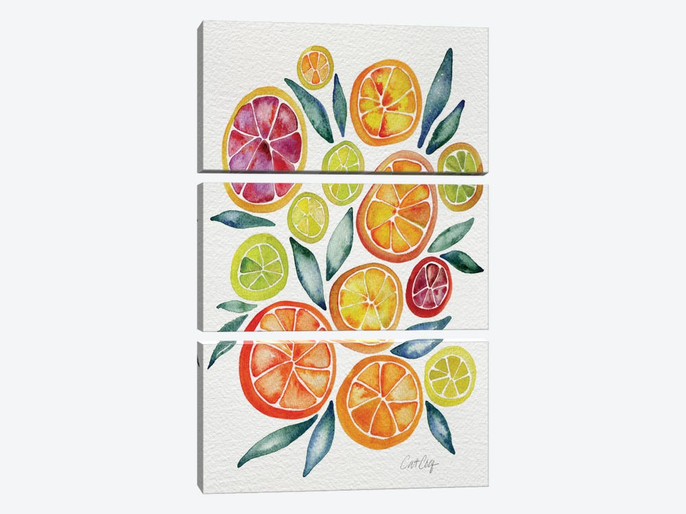 Citrus Slices Artprint by Cat Coquillette 3-piece Canvas Art