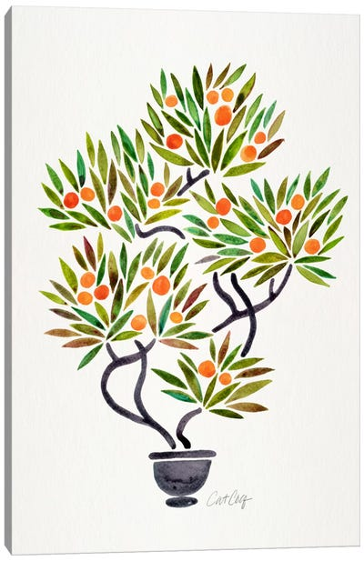 Bonsai Orange Tree I Canvas Print #CCE201