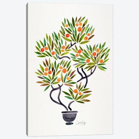 Bonsai Orange Tree I Canvas Print #CCE201} by Cat Coquillette Canvas Print