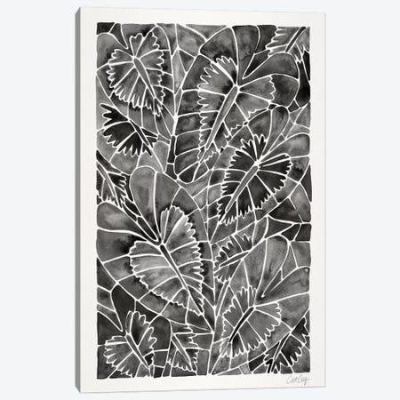 Black Schismatoglottis Calyptrata Canvas Print #CCE328} by Cat Coquillette Canvas Wall Art