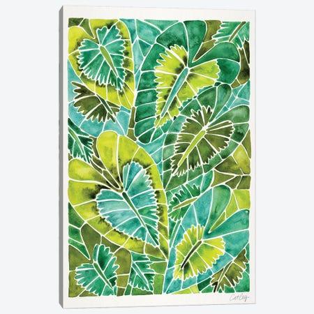 Green Schismatoglottis Calyptrata Canvas Print #CCE374} by Cat Coquillette Canvas Art