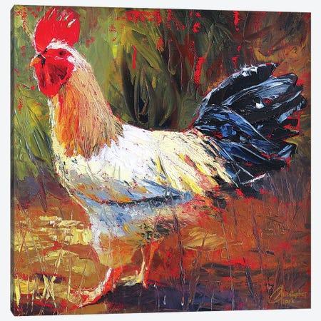 Gallo Italiano III Canvas Print #CCK25} by Christopher Clark Canvas Print
