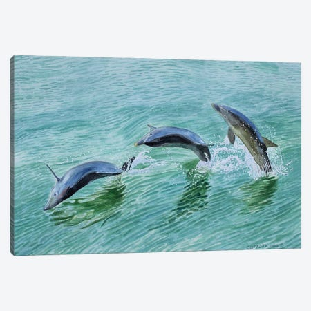 Dolphin Splash Canvas Print #CCL30} by Cory Clifford Canvas Wall Art