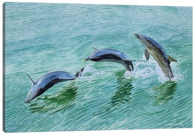 Dolphin Splash Canvas Art Print
