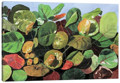 Transformation Of Color Canvas Art Print