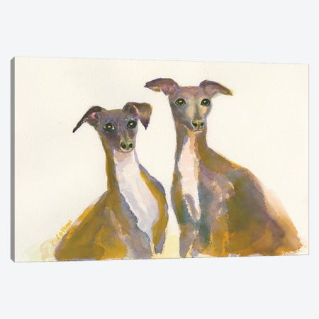 Italian Greyhounds, The Lovliest Of The Hounds Canvas Print #CCM28} by Connie Collum Canvas Artwork