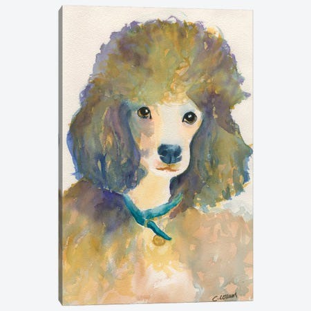 Poodle With Blue Collar Canvas Print #CCM51} by Connie Collum Art Print