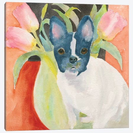 Tulip Frenchie Canvas Print #CCM62} by Connie Collum Canvas Wall Art
