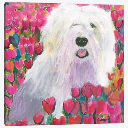 Sheepdog In Tulip Field Canvas Print #CCM66} by Connie Collum Canvas Print