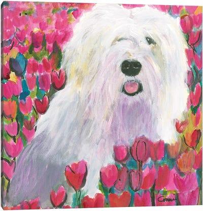 Sheepdog In Tulip Field Canvas Art Print