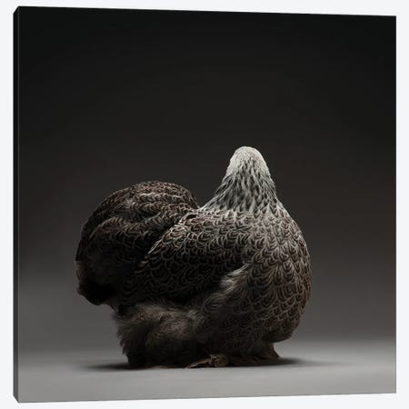 Cochin Bantam Canvas Print #CCN24} by CHICken Canvas Wall Art