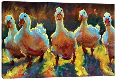 Duck Gangs Canvas Art Print