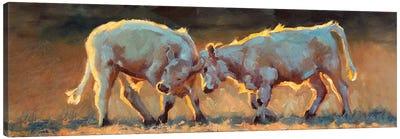 Cow Games Canvas Art Print