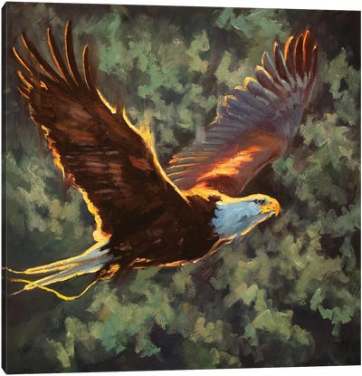 Soaring To Freedom Canvas Art Print