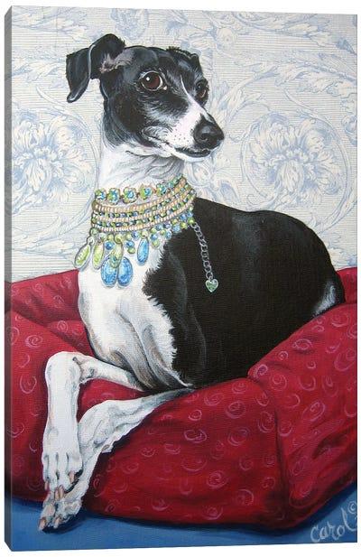 Italian Greyhound on Red Canvas Art Print