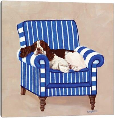 Springer on Blue Canvas Art Print