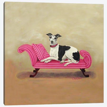 Italian Greyhound on Pink Canvas Print #CDL9} by Carol Dillon Art Print