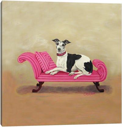 Italian Greyhound on Pink Canvas Art Print
