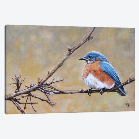 Bluebird Canvas Print #CDO2} by Cyndi Dodes Canvas Artwork