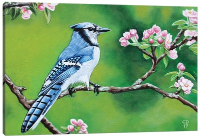 Bluejay In Spring Canvas Art Print
