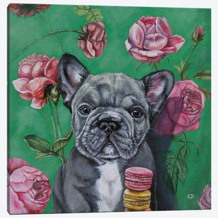 Frenchie Canvas Print #CDO41} by Cyndi Dodes Canvas Print