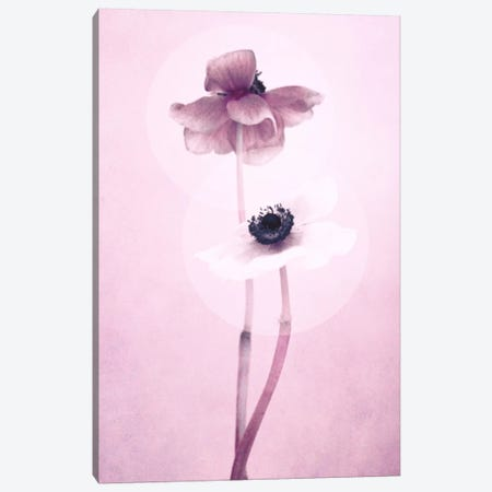 Anemone I Canvas Print #CDR103} by Claudia Drossert Canvas Art