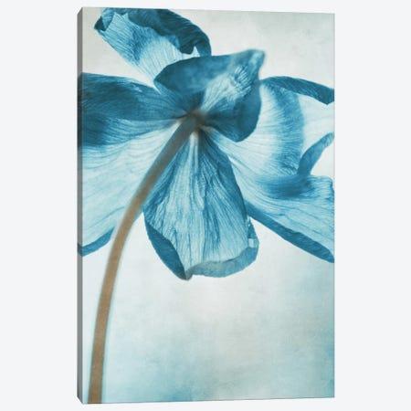Anemone III Canvas Print #CDR105} by Claudia Drossert Canvas Art Print