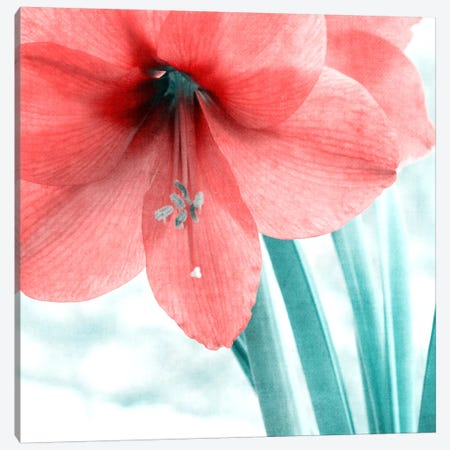 Delicate Canvas Print #CDR113} by Claudia Drossert Canvas Art Print