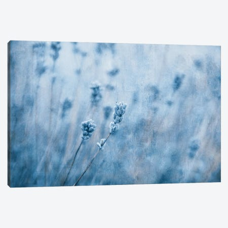 Lavender I Canvas Print #CDR118} by Claudia Drossert Canvas Art Print