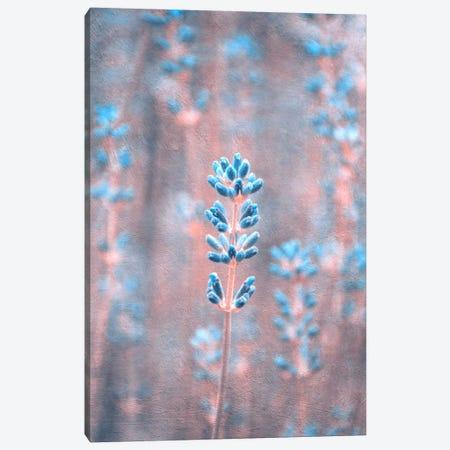 Lavender II Canvas Print #CDR119} by Claudia Drossert Art Print