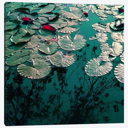 Water Lilies Canvas Print #CDR120} by Claudia Drossert Canvas Wall Art