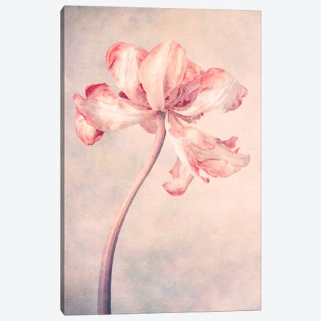 May Canvas Print #CDR121} by Claudia Drossert Canvas Wall Art