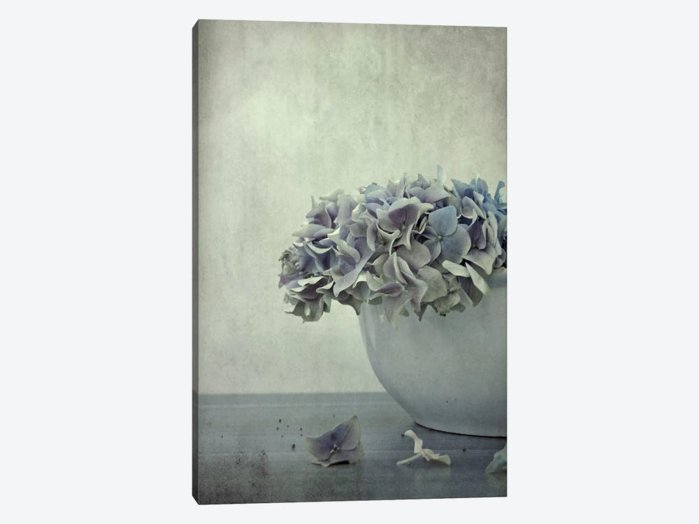 Old Hortensia by Claudia Drossert 1-piece Canvas Wall Art