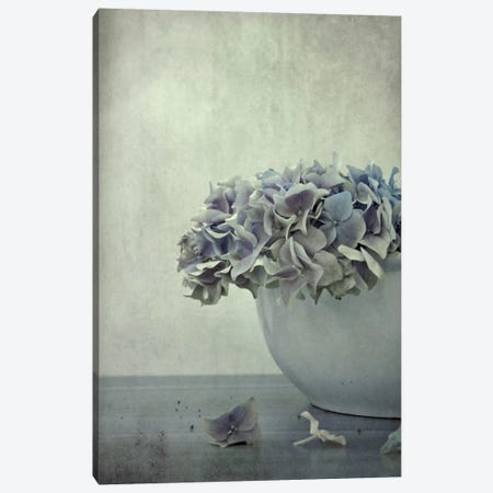 Old Hortensia Canvas Print #CDR123} by Claudia Drossert Canvas Artwork