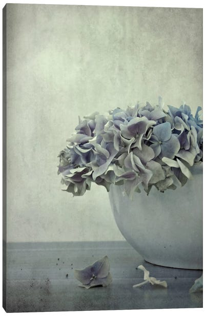 Old Hortensia Canvas Art Print