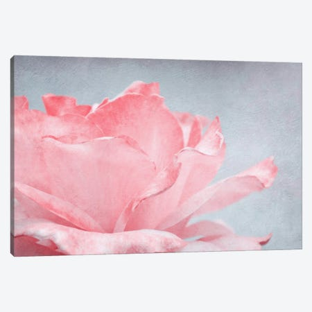 Pink Rose Canvas Print #CDR124} by Claudia Drossert Art Print