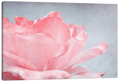 Pink Rose Canvas Art Print