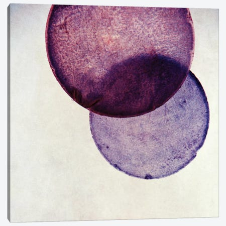 Capiz V Canvas Print #CDR12} by Claudia Drossert Canvas Print