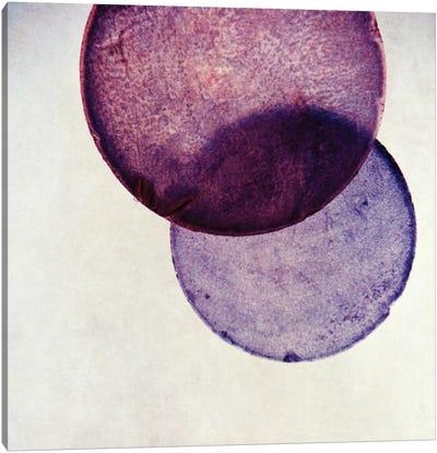 Capiz V Canvas Art Print