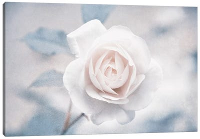 White Rose I Canvas Art Print