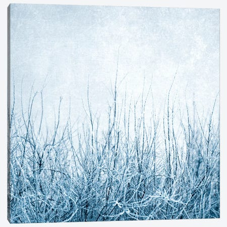Winter Canvas Print #CDR135} by Claudia Drossert Canvas Art