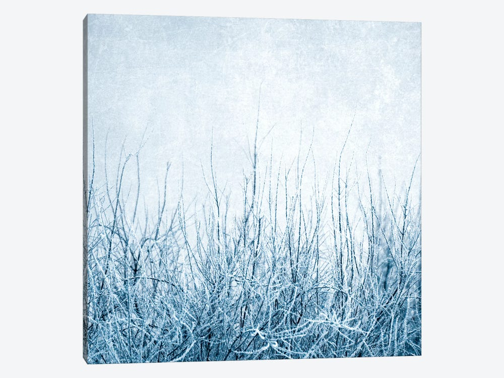 Winter by Claudia Drossert 1-piece Art Print