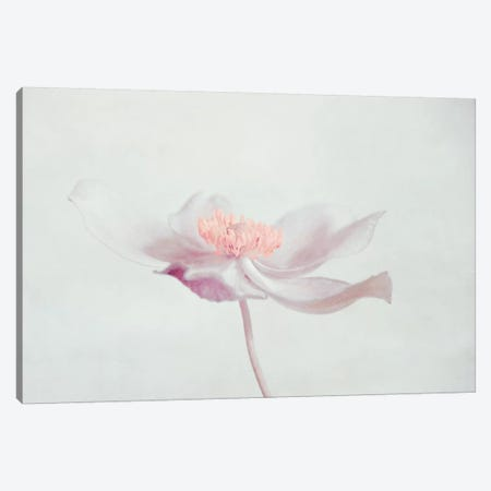 Fleur Canvas Print #CDR138} by Claudia Drossert Canvas Print