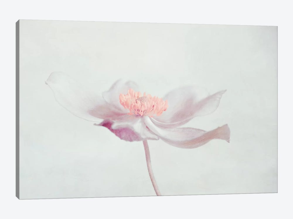 Fleur by Claudia Drossert 1-piece Canvas Artwork