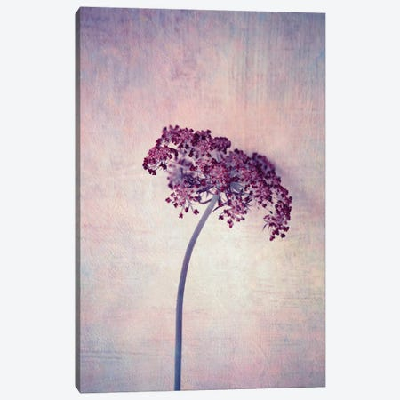 Lilac Canvas Print #CDR140} by Claudia Drossert Canvas Art