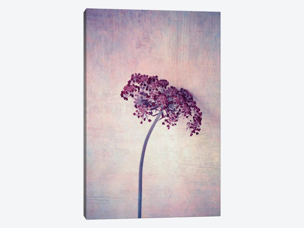 Lilac by Claudia Drossert 1-piece Canvas Art Print