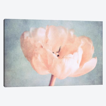 Silent Moments Canvas Print #CDR142} by Claudia Drossert Canvas Wall Art