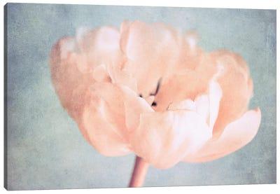 Silent Moments Canvas Art Print